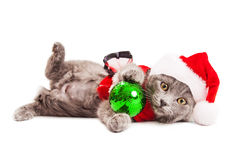 Χαριτωμένο εύθυμο γατάκι Χριστουγέννων Στοκ Εικόνες