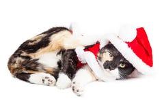 Χαριτωμένο εύθυμο γατάκι Χριστουγέννων Στοκ Φωτογραφία
