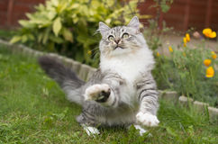 Χαριτωμένο εύθυμο γατάκι Στοκ φωτογραφία με δικαίωμα ελεύθερης χρήσης