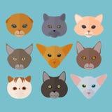 Χαριτωμένο ζώο γατών διανυσματική απεικόνιση
