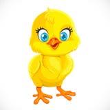 Χαριτωμένο κίτρινο κοτόπουλο μωρών κινούμενων σχεδίων Στοκ Φωτογραφίες