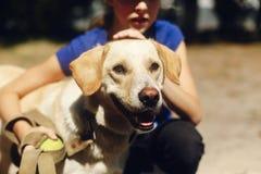 Χαριτωμένο κίτρινο σκυλί του Λαμπραντόρ από το παιχνίδι καταφυγίων με τη σφαίρα ο αντισφαίρισης Στοκ φωτογραφία με δικαίωμα ελεύθερης χρήσης