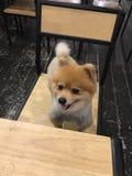 Χαριτωμένο και καλό σκυλί Στοκ φωτογραφία με δικαίωμα ελεύθερης χρήσης