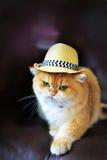 Χαριτωμένο καπέλο γατών Στοκ φωτογραφία με δικαίωμα ελεύθερης χρήσης
