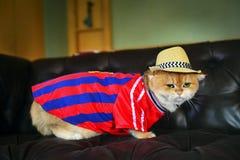 Χαριτωμένο καπέλο γατών Στοκ φωτογραφίες με δικαίωμα ελεύθερης χρήσης