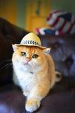 Χαριτωμένο καπέλο γατών Στοκ Φωτογραφίες