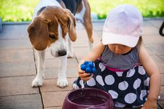 Χαριτωμένο κοριτσάκι μαζί με το σκυλί λαγωνικών στον κήπο στη θερινή ημέρα στοκ φωτογραφία με δικαίωμα ελεύθερης χρήσης