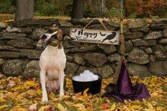 Χαριτωμένο κοστούμι σκυλιών Στοκ Εικόνα