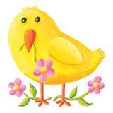 Χαριτωμένο κοτόπουλο μωρών Πάσχας με τα ρόδινα λουλούδια στοκ εικόνες