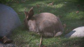 Χαριτωμένο κουνέλι στα gras απόθεμα βίντεο