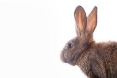 χαριτωμένο κουνέλι Στοκ εικόνες με δικαίωμα ελεύθερης χρήσης