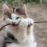 Χαριτωμένο κουτάβι γατών Στοκ Φωτογραφίες
