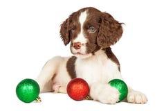 Χαριτωμένο κουτάβι με τις κόκκινες και πράσινες διακοσμήσεις Χριστουγέννων Στοκ Εικόνες