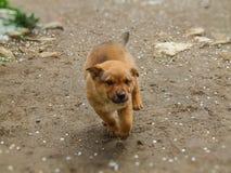 Χαριτωμένο κουτάβι που τρέχει ευτυχώς σε αναμονή για τα αγκαλιάσματα στοκ φωτογραφία