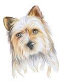 χαριτωμένο κουτάβι σκυλ& στοκ εικόνα