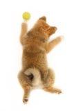 χαριτωμένο κουτάβι στοκ φωτογραφίες με δικαίωμα ελεύθερης χρήσης