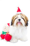 Χαριτωμένο κουτάβι tzu shih στο θέμα Χριστουγέννων Στοκ φωτογραφία με δικαίωμα ελεύθερης χρήσης