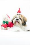 Χαριτωμένο κουτάβι tzu shih στο θέμα Χριστουγέννων στοκ φωτογραφία