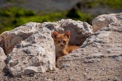 Χαριτωμένο κρύψιμο γατακιών, Al-Khobar, Σαουδική Αραβία Στοκ Φωτογραφία