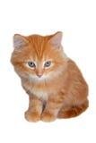 χαριτωμένο κόκκινο γατακιών στοκ εικόνες