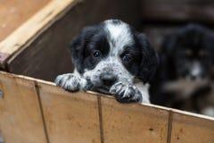 Χαριτωμένο λίγο κουτάβι σε ένα ξύλινο κιβώτιο ζητά να υιοθετηθεί με την ελπίδα Άστεγο σκυλί στοκ εικόνες