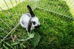 Χαριτωμένο λίγο λαγουδάκι τρώει τη σαλάτα, υπαίθρια σύνθετη, πράσινη χλόη στοκ φωτογραφίες