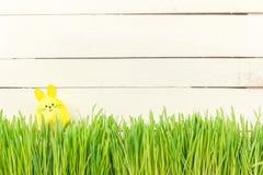Χαριτωμένο λαγουδάκι Πάσχας στην πράσινη φρέσκια χώρα αυγό Πάσχας κίτρινο Στοκ φωτογραφία με δικαίωμα ελεύθερης χρήσης