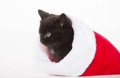 Χαριτωμένο μαύρο γατάκι στη γυναικεία κάλτσα Χριστουγέννων στοκ φωτογραφία με δικαίωμα ελεύθερης χρήσης