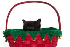 Χαριτωμένο μαύρο γατάκι στο καλάθι Στοκ Εικόνες