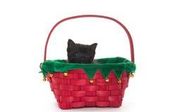 Χαριτωμένο μαύρο γατάκι στο καλάθι Στοκ Φωτογραφία