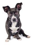 Χαριτωμένο μαύρο σκυλί Στοκ Φωτογραφίες
