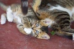 Χαριτωμένο μικρό γατάκι που εξετάζει τη κάμερα στοκ εικόνες με δικαίωμα ελεύθερης χρήσης