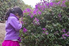 Χαριτωμένο μικρό κορίτσι που απολαμβάνει τη μυρωδιά των ιωδών λουλουδιών Στοκ εικόνες με δικαίωμα ελεύθερης χρήσης