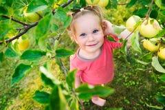 Χαριτωμένο μικρό κορίτσι που εξετάζει τα μήλα Στοκ φωτογραφία με δικαίωμα ελεύθερης χρήσης