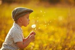 Χαριτωμένο μικρό παιδί με τις πικραλίδες στοκ εικόνα με δικαίωμα ελεύθερης χρήσης