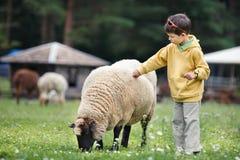 Χαριτωμένο μικρό παιδί που ταΐζει ένα πρόβατο Στοκ φωτογραφία με δικαίωμα ελεύθερης χρήσης