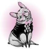 Χαριτωμένο μπουλντόγκ μόδας hipster απεικόνιση αποθεμάτων