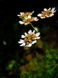 Χαριτωμένο λουλούδι στον κήπο στοκ εικόνες