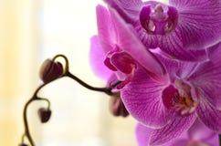 χαριτωμένο λουλούδι Στοκ Εικόνα
