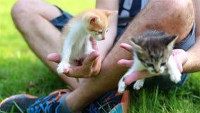 Χαριτωμένο παιχνίδι γατακιών στον κήπο απόθεμα βίντεο
