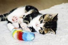 χαριτωμένο παιχνίδι γατακιών Στοκ Εικόνα