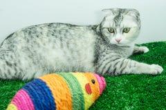 Χαριτωμένο παιχνίδι γατών με το ζωηρόχρωμο παιχνίδι ποντικιών για τα παιχνίδια κατοικίδιων ζώων/γατών γατών Στοκ Εικόνα