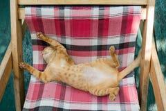 Χαριτωμένο παιχνίδι γατακιών γατών/γατακιών μωρών στο δίπλωμα των κρεβατιών Στοκ Φωτογραφίες