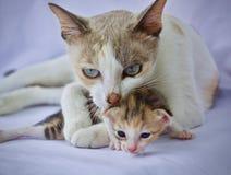 Χαριτωμένο παιχνίδι γατακιών στοκ φωτογραφία