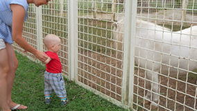 Χαριτωμένο παιδί στο ταΐζοντας πόνι χλόης ζωολογικών κήπων με τη μητέρα του Το άλογο με την ευχαρίστηση τρώει μια απόλαυση φιλμ μικρού μήκους