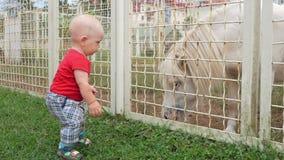 Χαριτωμένο παιδί στο ταΐζοντας πόνι χλόης ζωολογικών κήπων Σχίζει από τη χλόη με έναν χορτοτάπητα και προσφέρει το άλογο μεταχειρ φιλμ μικρού μήκους