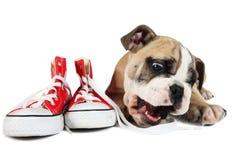 Χαριτωμένο παλαιό αγγλικό σκυλί μπουλντόγκ που βρίσκεται μπροστά από τα κόκκινα παπούτσια Στοκ εικόνες με δικαίωμα ελεύθερης χρήσης