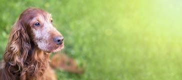 Χαριτωμένο παλαιό έμβλημα σκυλιών Στοκ φωτογραφία με δικαίωμα ελεύθερης χρήσης