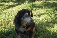Χαριτωμένο παλαιό σκυλί Στοκ φωτογραφία με δικαίωμα ελεύθερης χρήσης