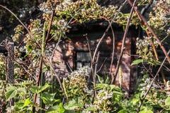Χαριτωμένο παλαιό σπίτι στο άνθος Στοκ Εικόνες